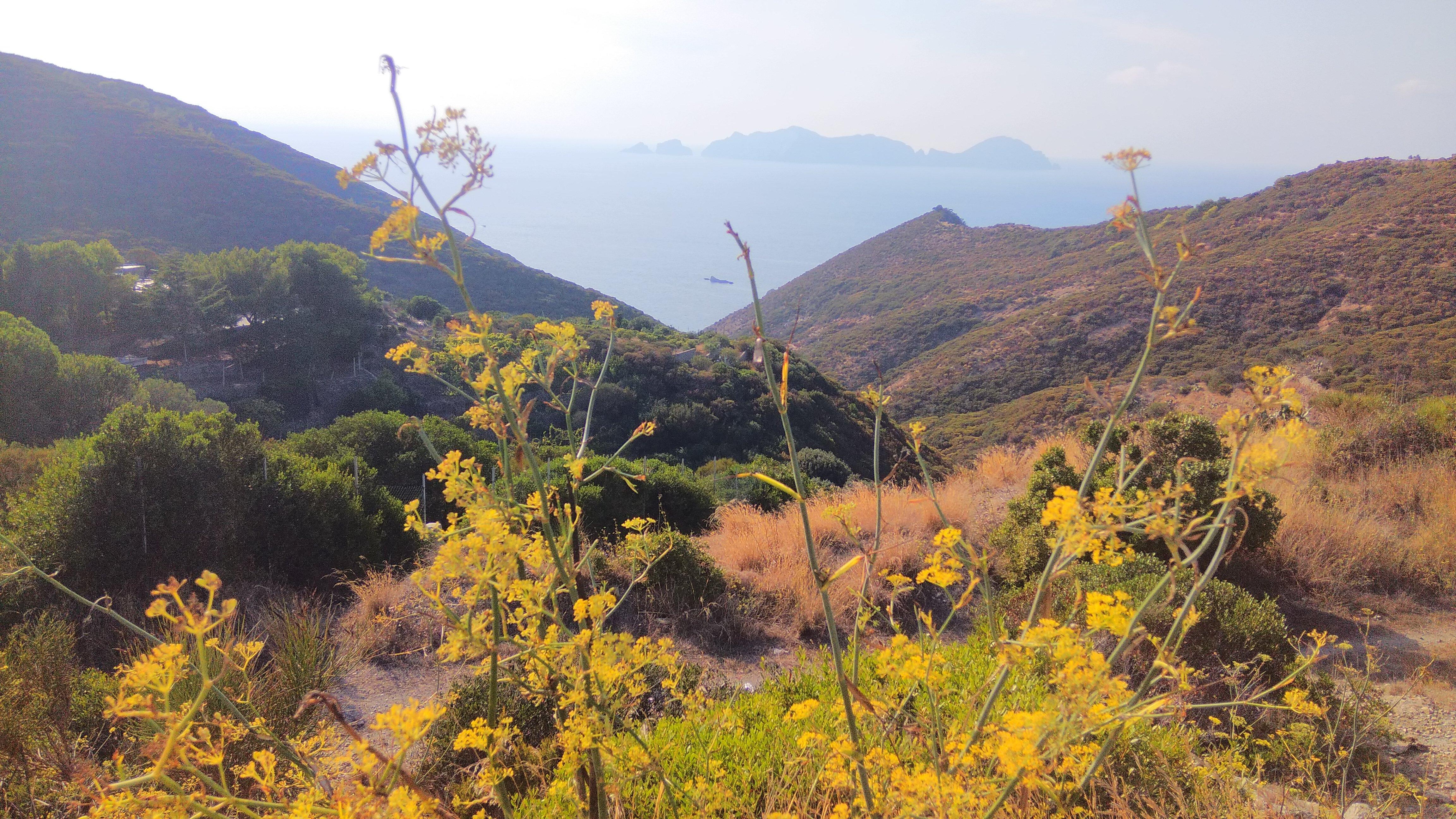 Die Natur und Vegetation auf Ponza